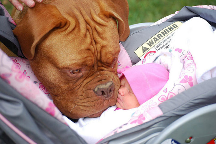 """33 Adorable Photos of Dogs and Babies - """"Tiny human...I will protect you forever."""""""
