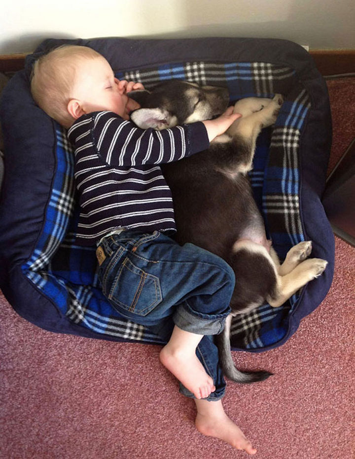 33 Adorable Photos of Dogs and Babies - Taking a nap with his best friend.