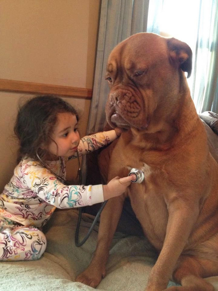 33 Adorable Photos of Dogs and Babies - Future vet giving her French Mastiff a checkup.