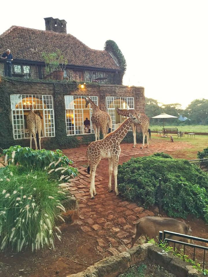 Nowhere can you experience living alongside such beautiful animals. How cute is that baby giraffe?