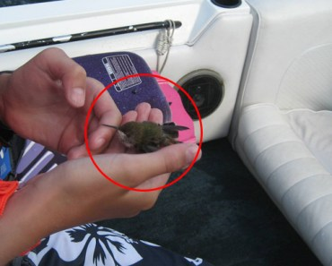 Hummingbird Rescued by a Family Boating on a Lake.