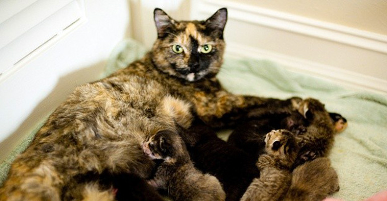 This Rescue Cat Just Had A Litter Of 4 Kittens But She Happily Adopted 5 More