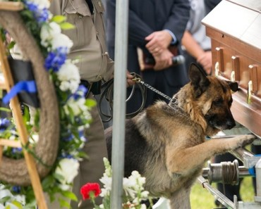This Police Dog Says Goodbye to His Fallen Partner