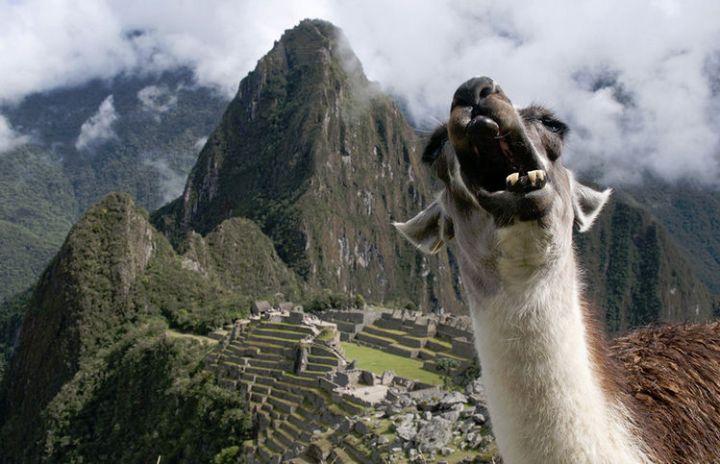 10 animal photobombs - Say cheese!