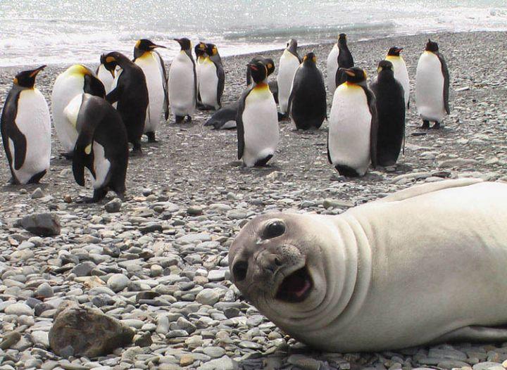 10 animal photobombs - Crashing the penguin party.
