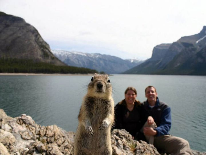 10 animal photobombs - A great day for a photo.