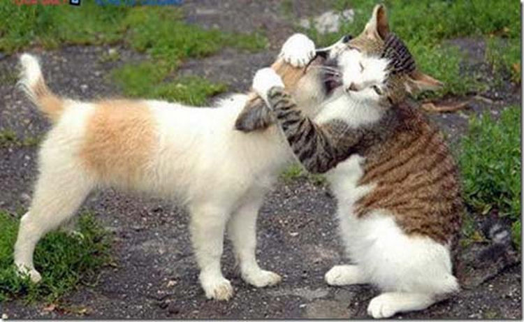 Image result for cats hugging images