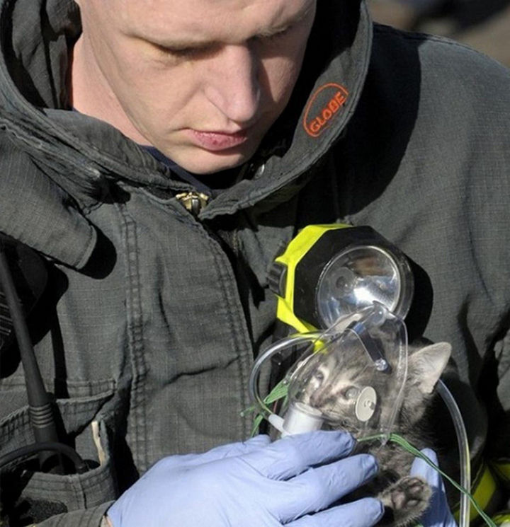 20 Photos Will Restore Your Faith In Humanity - This firefighter providing oxygen to a cat that was rescued from a house fire.