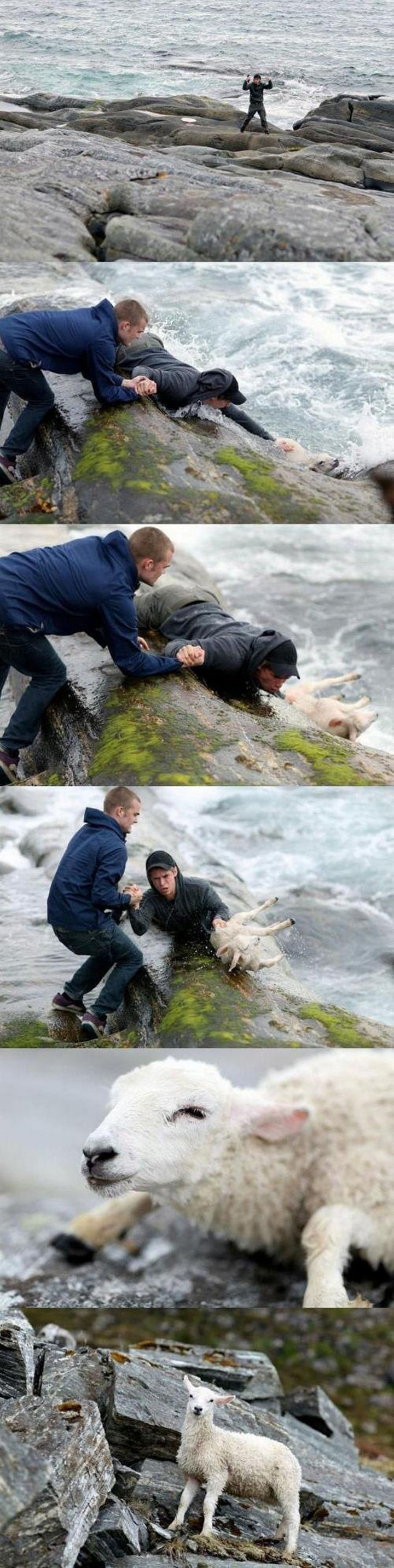 20 Photos Will Restore Your Faith In Humanity - Two Norwegian guys rescuing a sheep that accidentally fell into the ocean.
