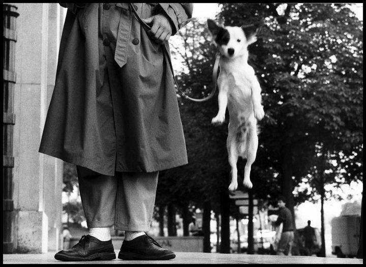 22 Timeless Images - Dog captured jumping in the air beside his human in Paris (1989).