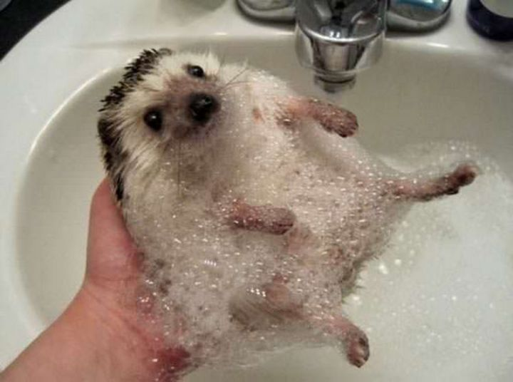 26 Life Lessons We Can Learn From Animals - Happiness is a long, hot relaxing bath.