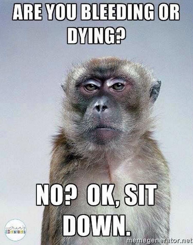 67 Hilarious Teacher Memes - Sit. Down.