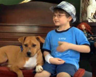 Mother Brings Home Xena the Pitbull for Her Autistic Son Jonny.