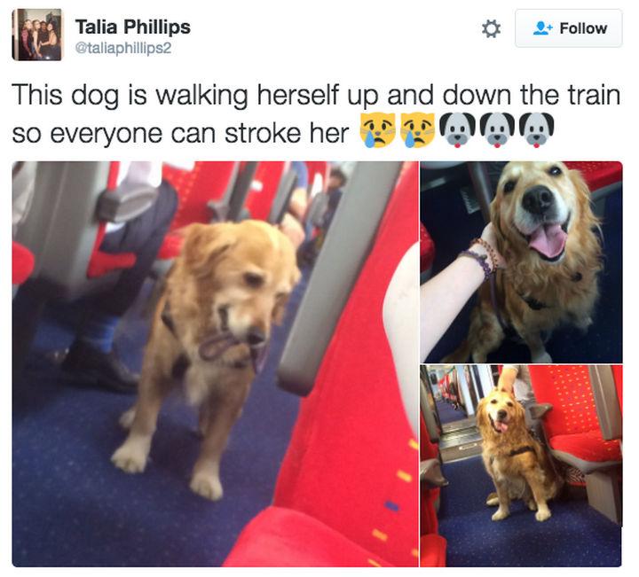 30 Happy Pictures - Smart doggie!