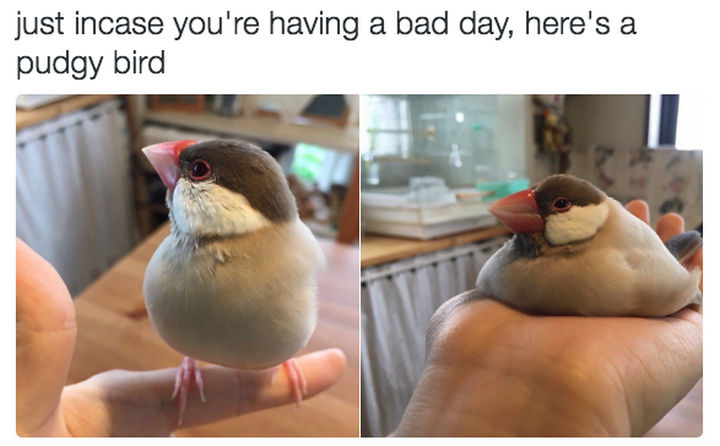30 Happy Pictures - Pretty pudgy bird.