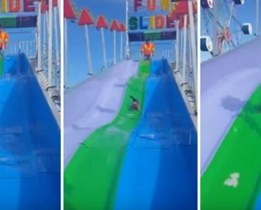Happy Puppy Having Fun Sliding Down a Carnival Slide.