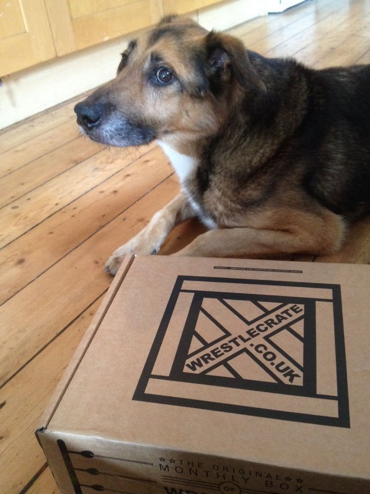 """13 Dogs Feeling Guilty - """"I didn't mean to maul the mailman. I couldn't wait to see what was inside the box."""""""