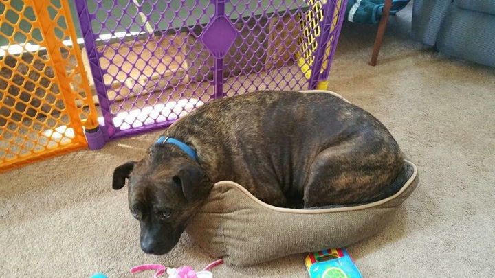 """13 Dogs Feeling Guilty - """"You caught me. I'm trying to sleep in the cat's bed."""""""