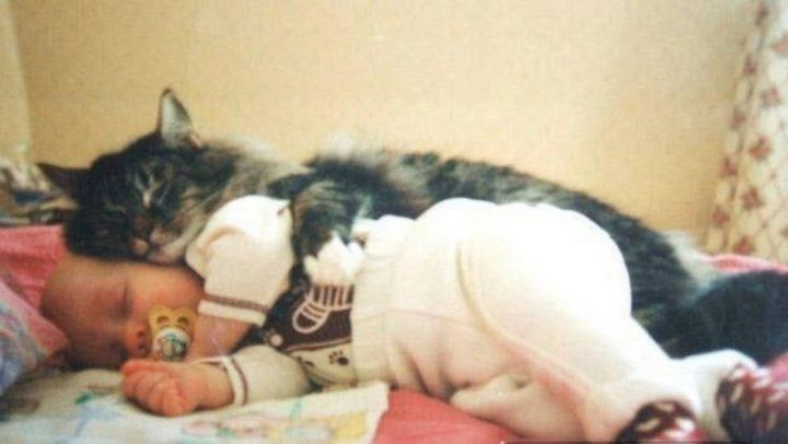 """21 Cats Babysitting Babies - """"I finally get to be the big spoon."""""""