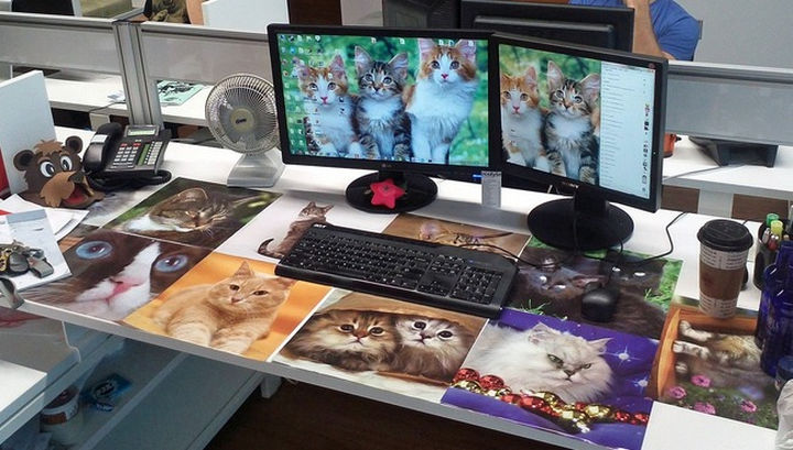 26 Funny Office Pranks - The kittens of the internet.