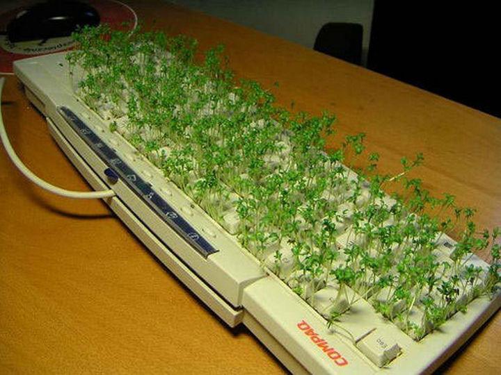 26 Funny Office Pranks - Ch-Ch-Ch-Chia keyboard.