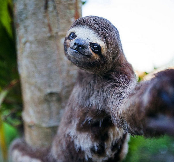 22 Funny Animal Selfies - When you're this cute, you just HAVE to take a selfie.