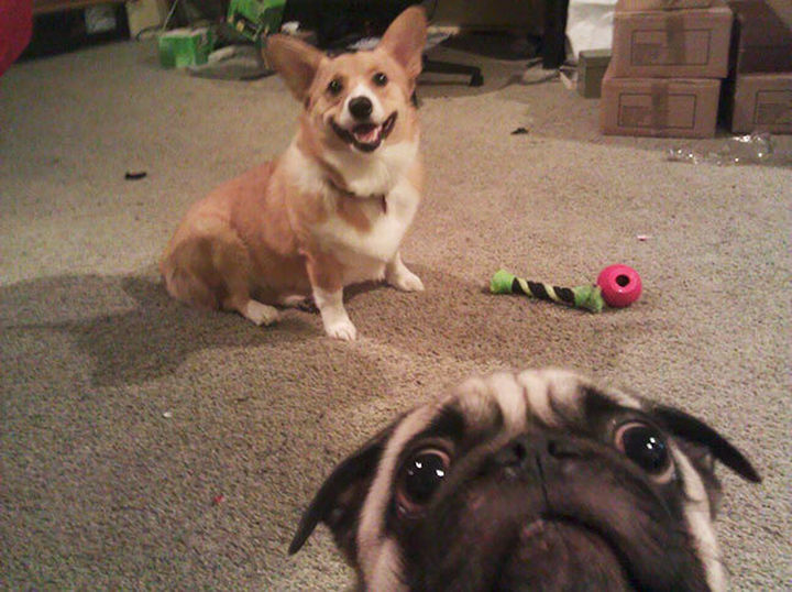 22 Funny Animal Selfies - I can't decide if this is a selfie or a photobomb!