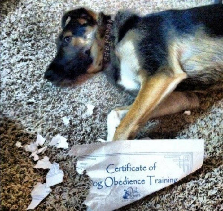 22 Funny Examples of Irony - The training worked well!