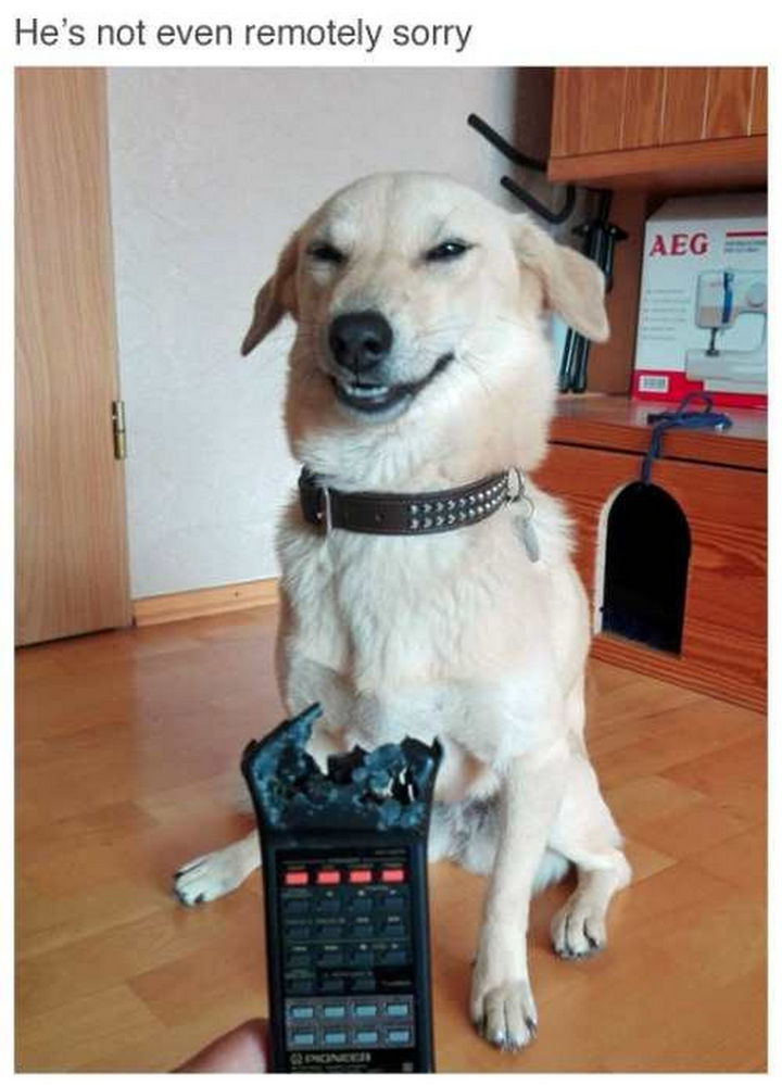 26 Funny Photos - He looks so proud.