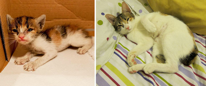 29 Before and After Photos of Family Cats - A rescued kitten that grew up cute and strong thanks to a loving family.