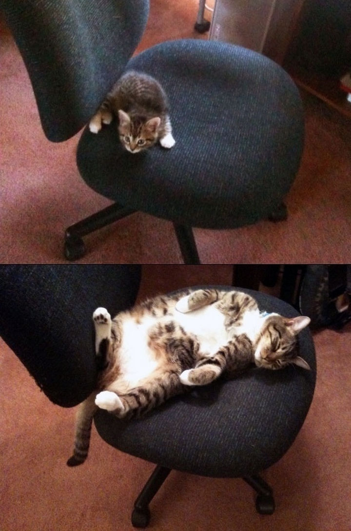 """""""This chair is all mine!"""""""