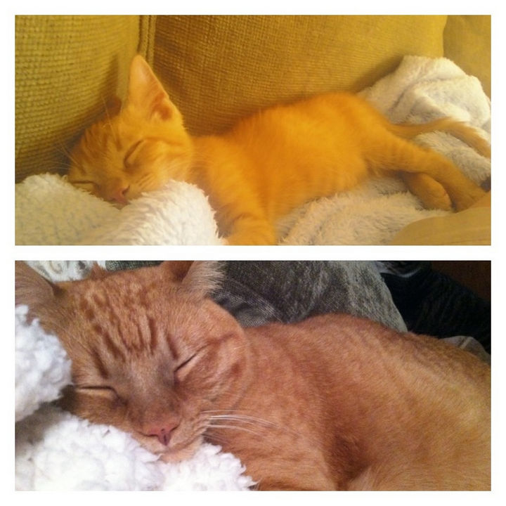 29 Before and After Photos of Family Cats - Rescue kitten is extremely content even 3 years later.
