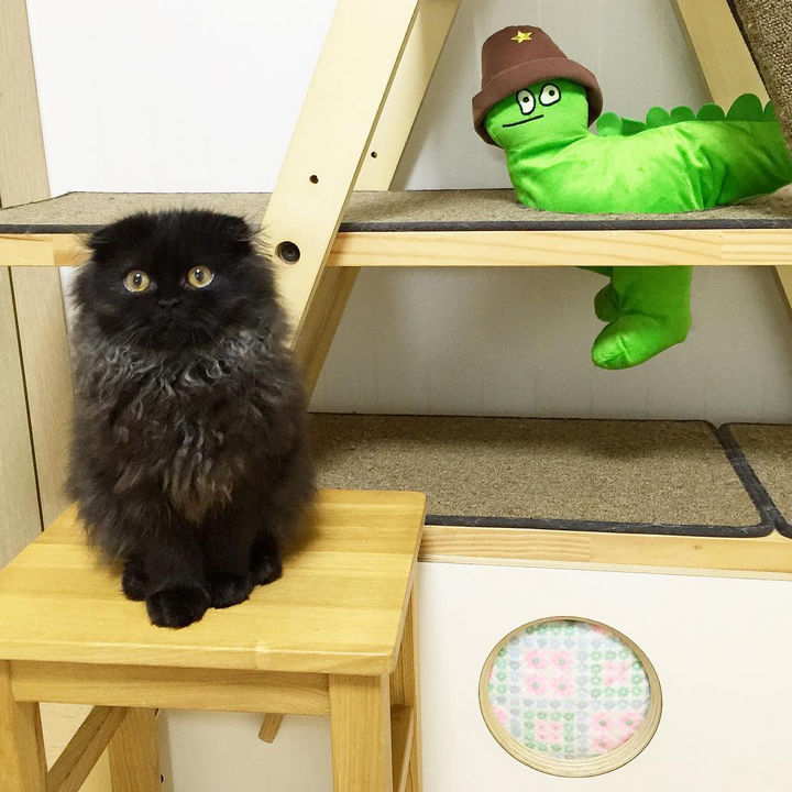 Meet Gimo the cat! He is taking over the internet with his big, beautiful eyes.