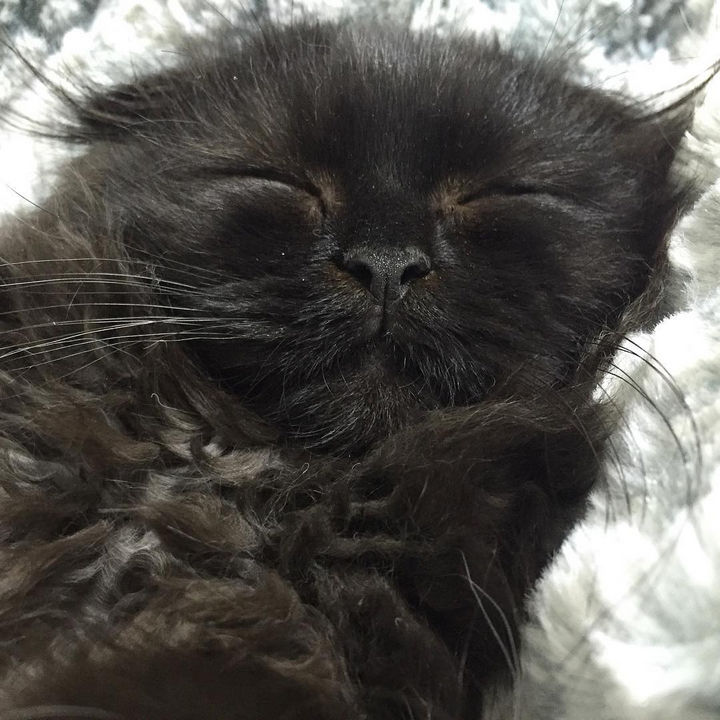 Gimo is probably dreaming of what he's going to do next!