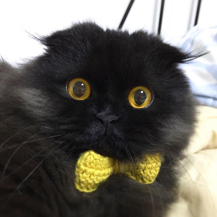 Gimo looks dapper with his cute yellow tie and he invites you to follow him on Instagram for more great photos.