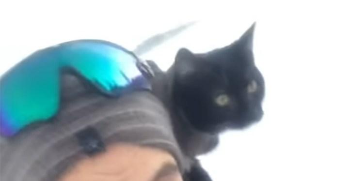 Weston the Cat Enjoys Sledding Down Slopes with His Human.