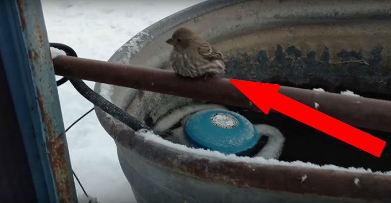 Older Man Saves Tiny Bird Frozen to a Metal Fence Pipe.