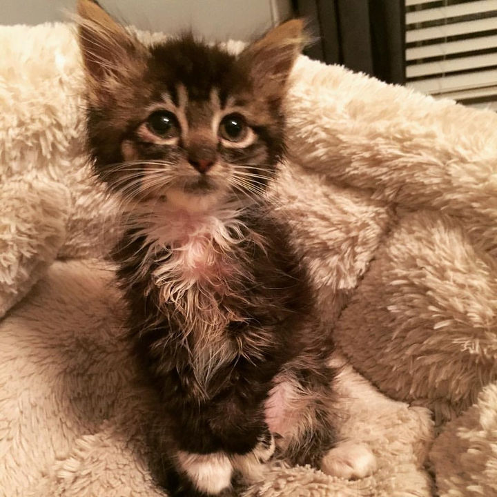 After a trip to the vet, she was found to have been born without elbow joints.