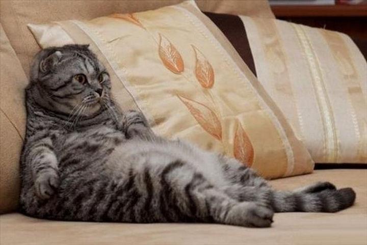 23 Amusingly Lazy Cats - Just chillin'.