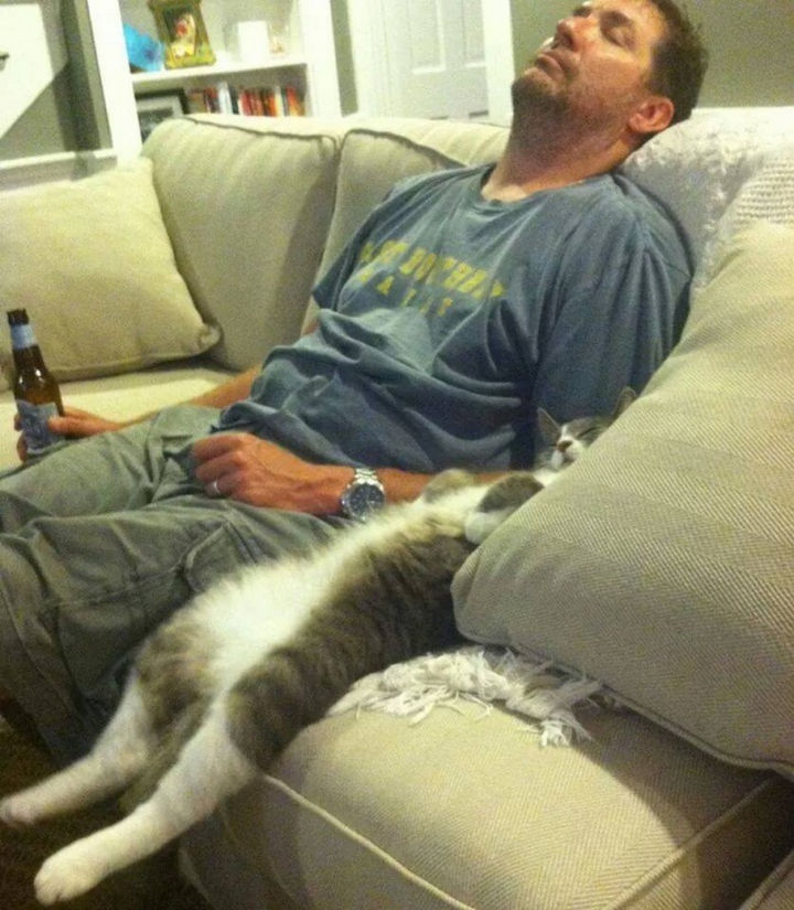 23 Amusingly Lazy Cats - Watching the game. Sort of...