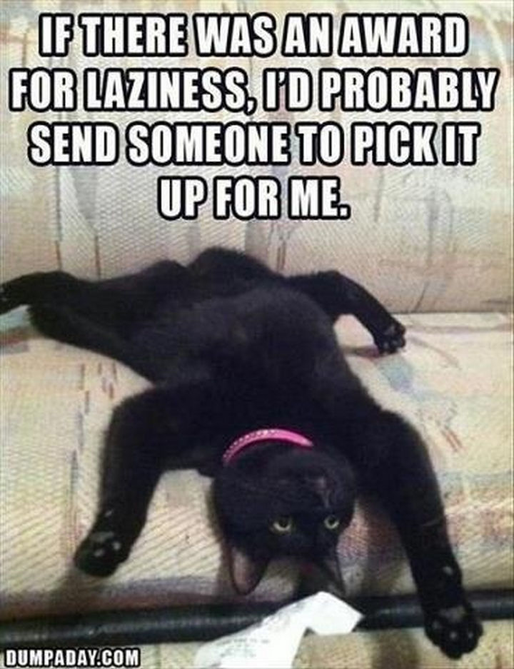 23 Amusingly Lazy Cats - If there was an award for laziness, I'd probably send someone to pick it up for me. True dat.