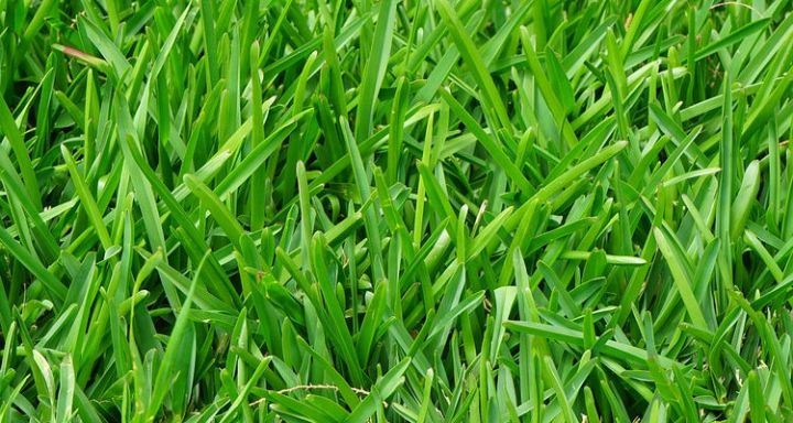 Squeeze out weeds by growing a thick and healthy lawn.