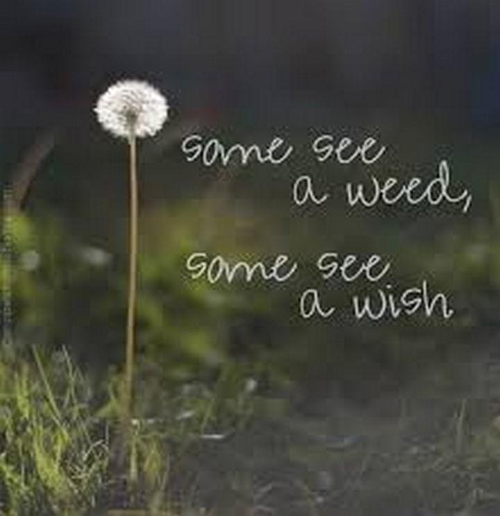 "41 Positive Quotes - ""Some see a weed, some see a wish."""