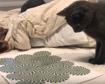 """Cat Mesmerized By """"Rotating Snakes"""" Optical Illusion."""