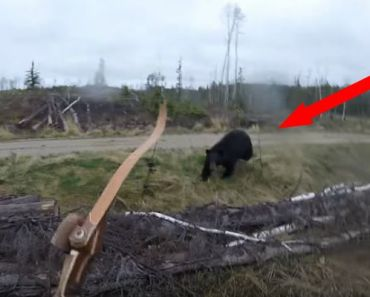 Black Bear Charges Towards Hunter in Fire River, Ontario.