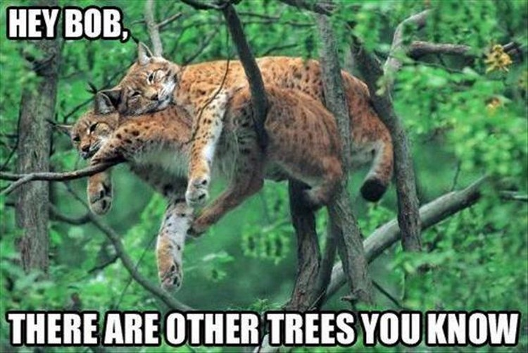 "37 Funny Animal Memes - ""Hey Bob, there are other trees you know."""