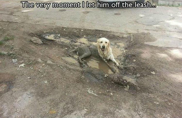 "37 Funny Animal Memes - ""The very moment I let him off the leash..."""