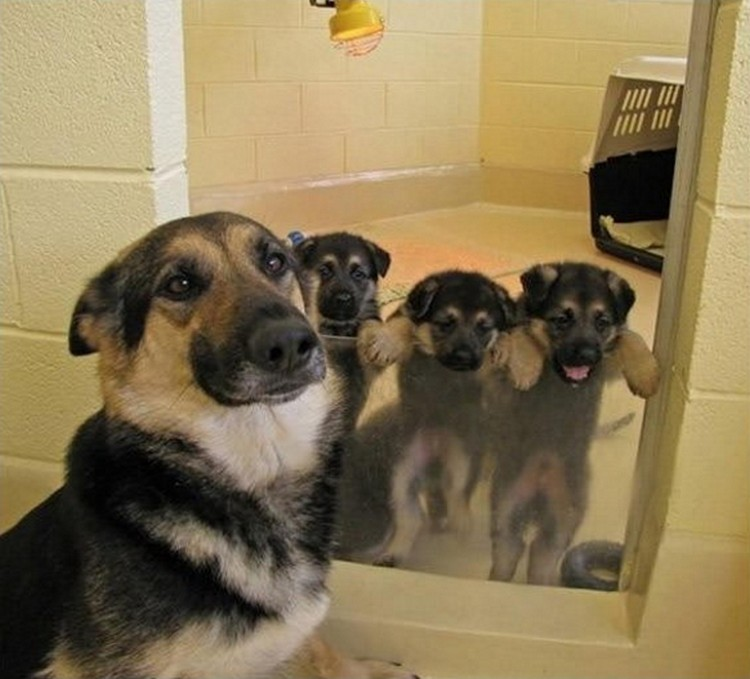 21 Proud Mommy Dogs - So proud of her little family.