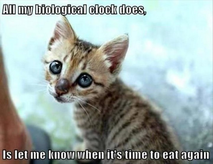 """27 Funny Animal Memes - """"All my biological clock does is let me know when it's time to eat again."""""""