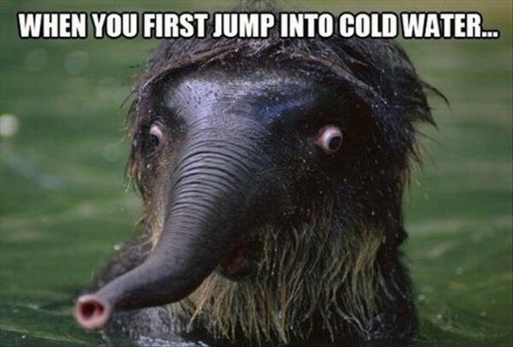 """27 Funny Animal Memes - """"When you first jump into cold water..."""""""
